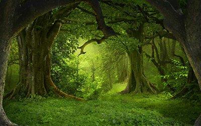 Les valeurs morales du druidisme traditionnel (suite)